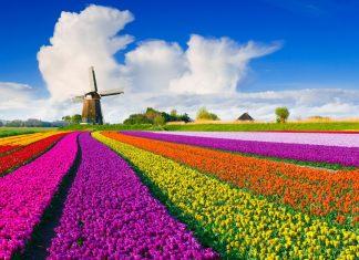 Biểu tượng Hà Lan